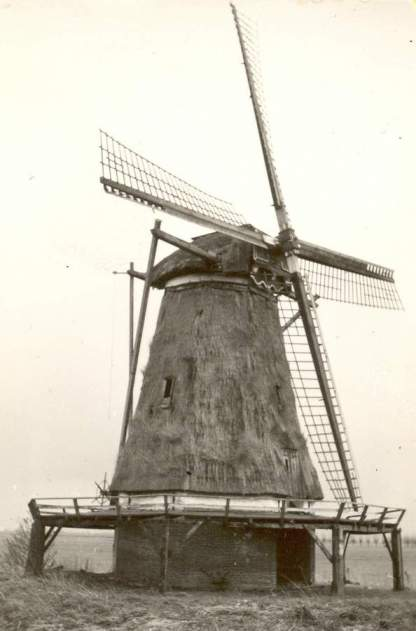 korenmolen Windesheim in 1950, foto: ?